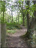 SK2477 : Path into Horse Hay Coppice by David Smith