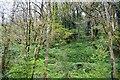 SX2458 : Westnorth Wood by N Chadwick
