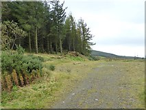 N7196 : Forest track below Loughanleagh by Oliver Dixon