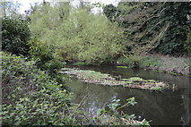 TQ0586 : River Colne by N Chadwick