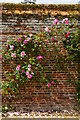TL5238 : Roses in the walled garden, Audley End by Christopher Hilton