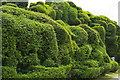 TL5238 : Bizarrely-shaped hedge, Audley End by Christopher Hilton