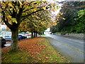H4573 : Fallen leaves along Old Mountfield Road, Omagh by Kenneth  Allen