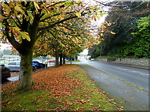 H4573 : Fallen leaves along Old Mountfield Road, Omagh by Kenneth  Allen