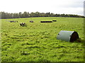 ST6462 : Laid out for some equestrian activity by Neil Owen