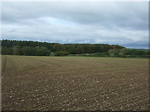 SK0628 : Large field off the B5013 by JThomas