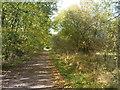 SO8694 : October Railway Path by Gordon Griffiths