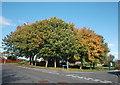 NJ7522 : Suburban corner (autumn trees) by Bill Harrison