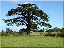 SO8844 : A cedar tree in Croome Park by Philip Halling