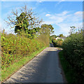 SK4942 : Up Robinettes Lane in October by John Sutton