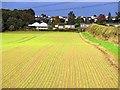 NZ1365 : Winter barley below Heddon Banks : Week 42