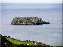 D0445 : Sheep Island by David Dixon