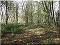 NX4337 : Bog Plantation by Jon Alexander
