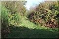 ST2588 : Public footpath, Coed Bedw by M J Roscoe