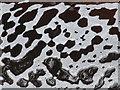 NJ1454 : Lacy Patterns in the Foam by Anne Burgess
