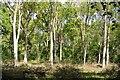 SP9949 : Hanger Wood by N Chadwick