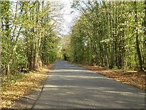 SO8534 : Tree-lined road to Bushley Green by Philip Halling
