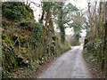 SX7655 : Lane at Dottin's Quarry by Derek Harper