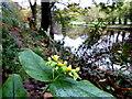 H4772 : Wild plants (1) by Kenneth  Allen