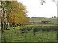 NS9955 : South Lanarkshire landscape by M J Richardson