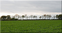 TL3160 : Skyline near Cambourne by Keith Edkins