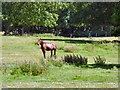 SJ0478 : Horse at Bodrhyddan by Gerald England