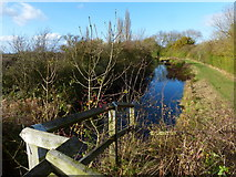 SK8336 : Grantham Canal next to the derelict lock 14 by Mat Fascione
