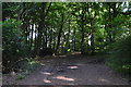 SU8594 : Footpath, Great Tinker's Wood by N Chadwick