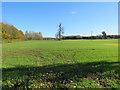 TL4649 : An autumn-sown field near Ley Grove Cottages by John Sutton