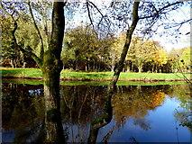 H4772 : Still waters, Camowen River by Kenneth  Allen