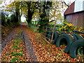 H5472 : Leafy lane, Bracky : Week 45