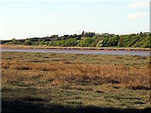 SD3642 : Salt marsh by the River Wyre by Steve Daniels