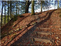NS4276 : Path ascending to the edge of the woods by Lairich Rig