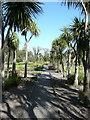 NX0942 : Cordyline Avenue, Logan Botanic Garden by Humphrey Bolton