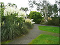 NX0942 : Pampas grass, Logan Botanic Garden by Humphrey Bolton