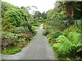 NX0942 : Path on the east side of the walled garden, Logan Botanic Garden by Humphrey Bolton
