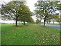 SE3237 : Avenue of trees alongside Princes Avenue, Leeds by Humphrey Bolton