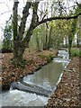 SW6443 : Stream in Tehidy Country Park by Philip Halling