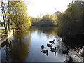 TQ4470 : Rush Pond, Chislehurst Common by Marathon