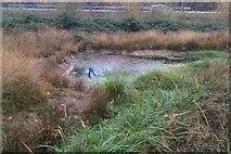 TQ1362 : Pond by CBL