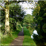 SJ9921 : Canal south of Great Haywood in Staffordshire by Roger  Kidd