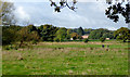 SJ9921 : Flood plain pasture south of Great Haywood, Staffordshire by Roger  Kidd