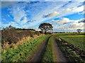 NZ1068 : Track near Turpin's Hill : Week 46