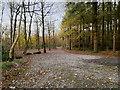 SD5476 : Dalton Woodland Burial Ground by David Dixon