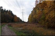 TQ1362 : Pylons crossing Esher Common by Mike Pennington