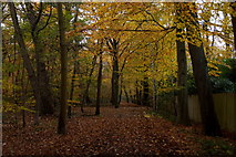 TQ1362 : Path on the northern edge of Esher Common by Mike Pennington