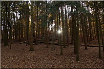 TQ1362 : Autumn afternoon, Esher Common by Mike Pennington
