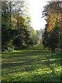 ST7734 : Fir walk, Stourhead Gardens by Philip Halling