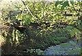 SK5360 : Quarry Lane Nature Reserve, Mansfield, Notts. by David Hallam-Jones