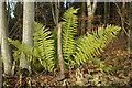 NT5835 : Ferns by the road to Redpath by Walter Baxter